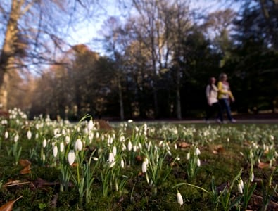 Scone Palace Snowdrops ©Perthshire Picture Agency