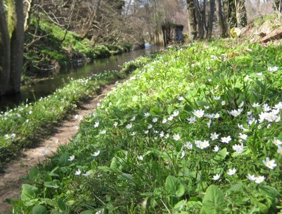 Spring on Lade Path
