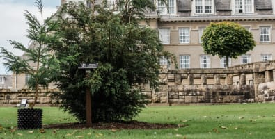 PCCP's 1,000th tree next to its first tree at Gleneagles Hotel © photos by zoe