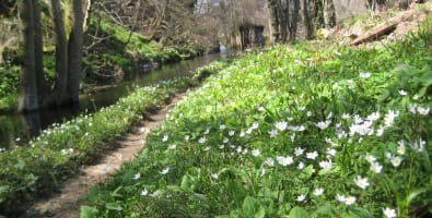 Top 10 spring walks in Perthshire